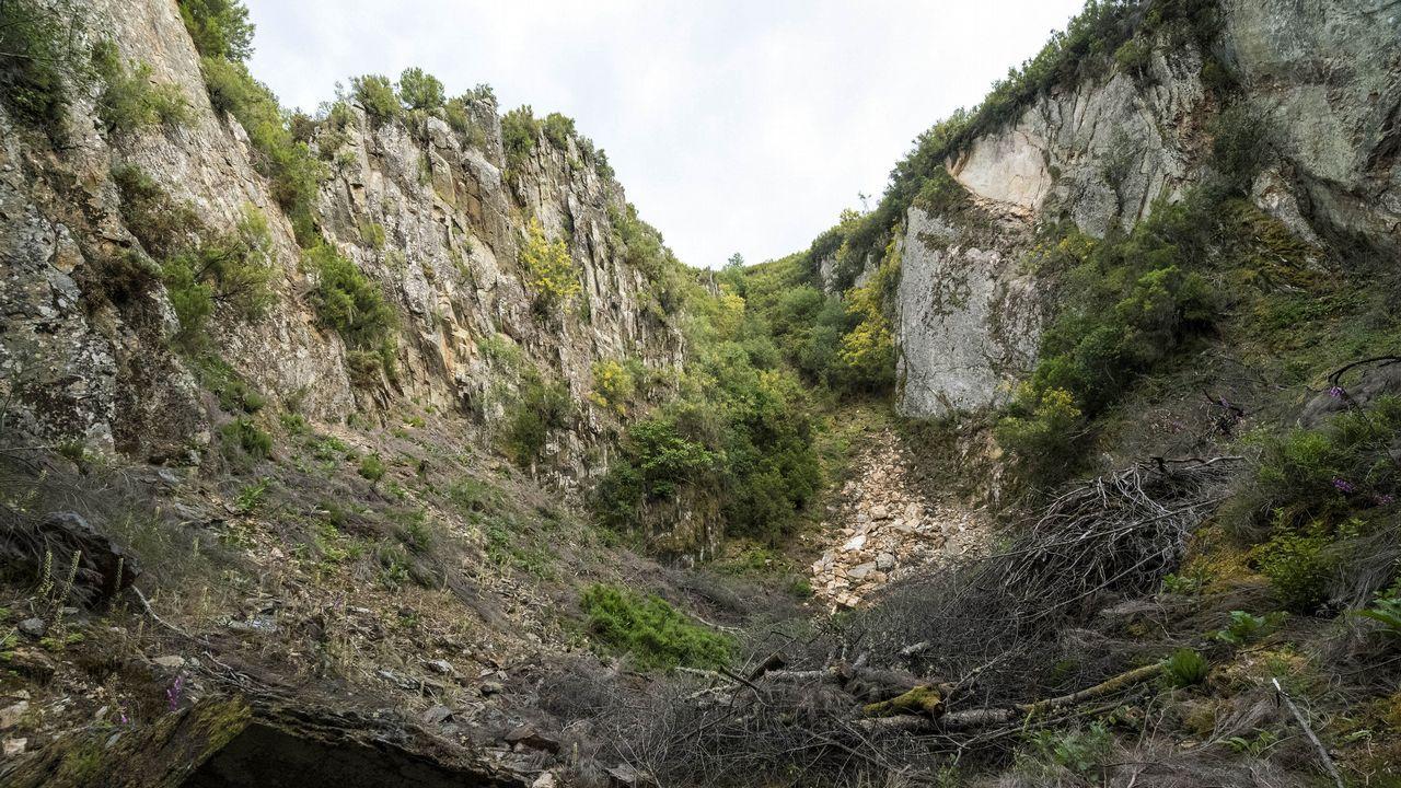 Un itinerario visual por el complejo minero de O Covallón.Viñedo de albariño afectado por el mildiu