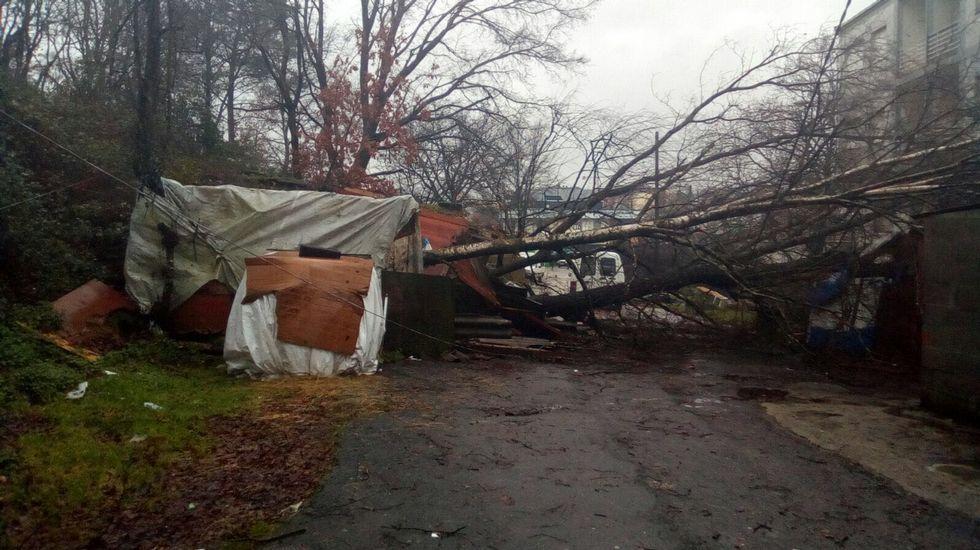 25 años de la Fundación San Rosendo.Un árbol destrozó una chabola en Maside
