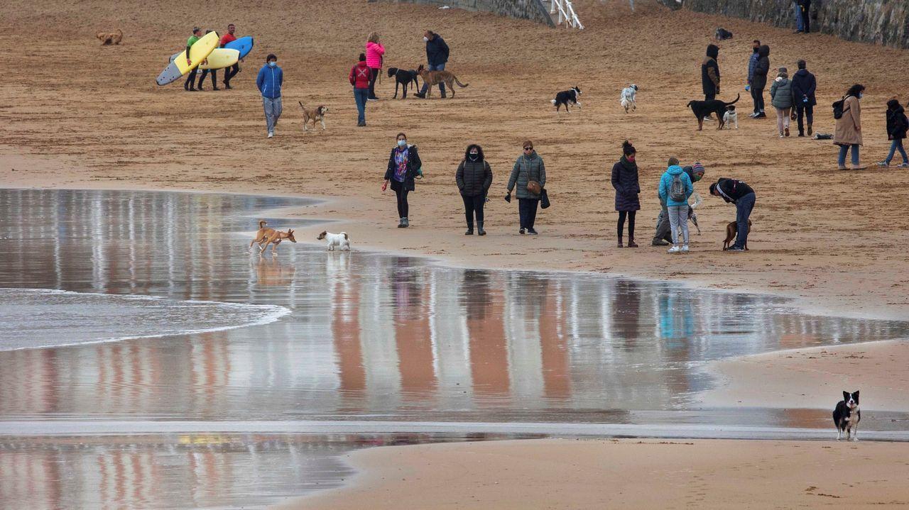Un grupo de personas pasean con sus perros por el arenal de la playa de San Lorenzo en Gijón