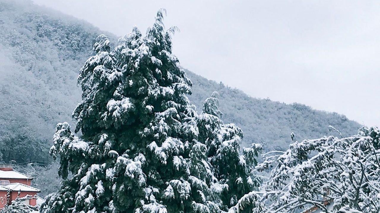 La nieve cubriendo los montes y árboles del concejo de Aller