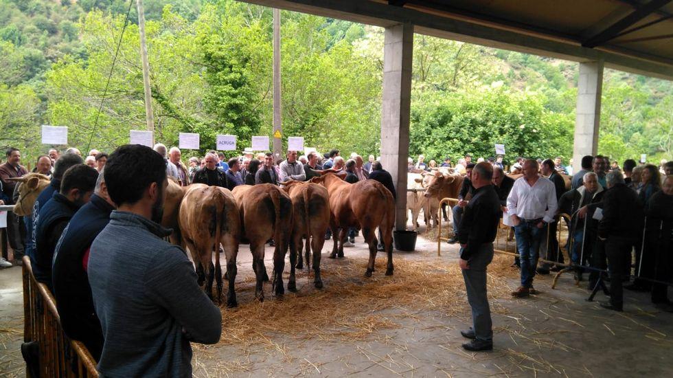 Cervantes recuperó la histórica feria de ganado.Un aspecto de la feria ganadera celebrada el pasado año en Seoane do Courel, la primera que se organizó en el municipio en varias décadas