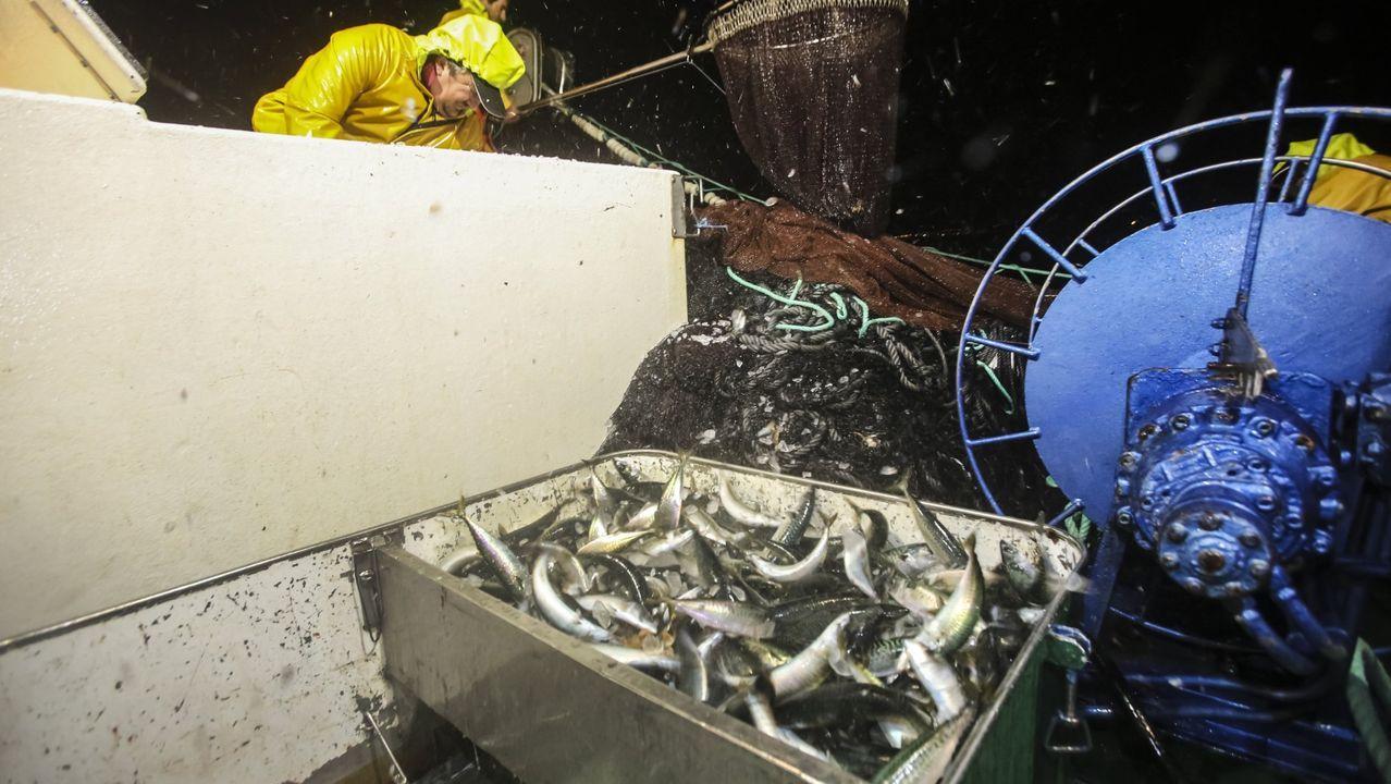 Ataque de orcas al velero Urki I.Orcas el pasado viernes 5 de julio en Fisterra