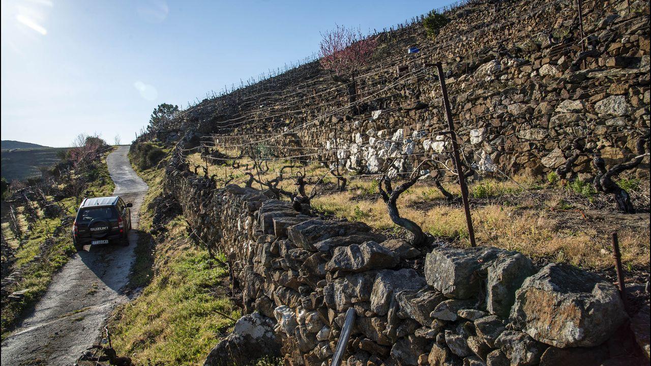Otro aspecto de los viñedos de San Amaro