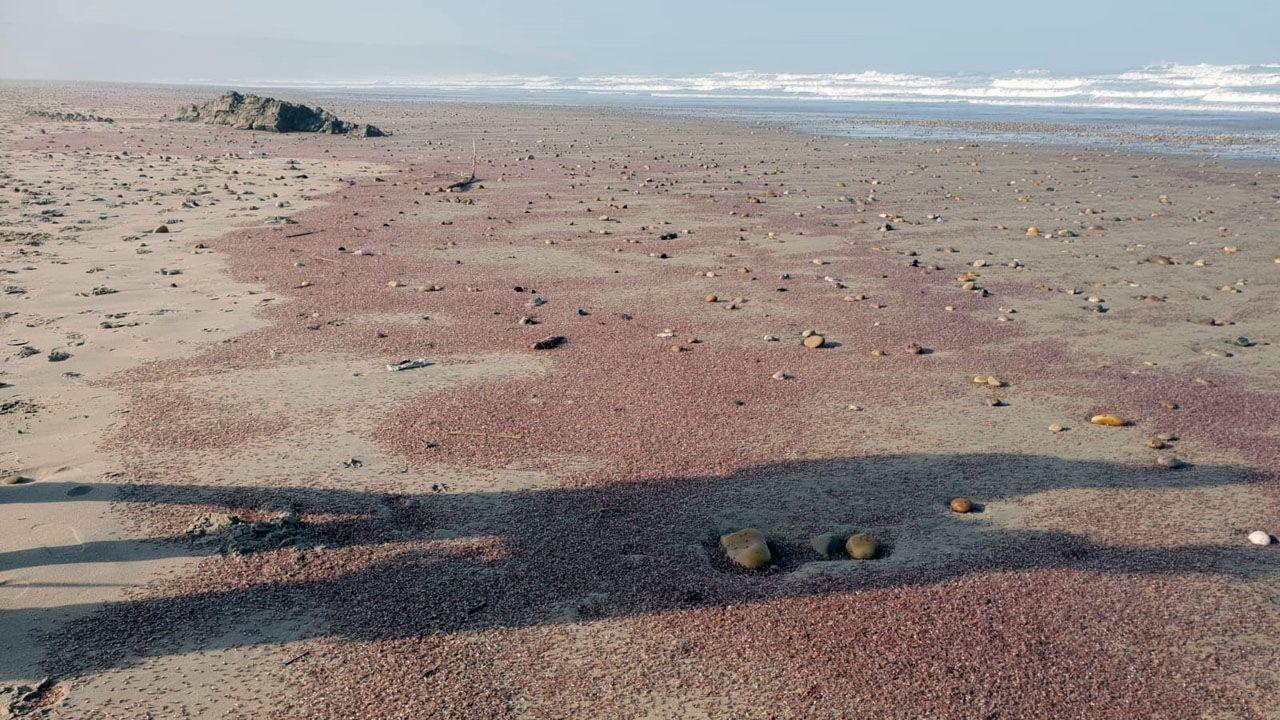 Millones de pequeños crustáceos tiñén Xagó de rojo