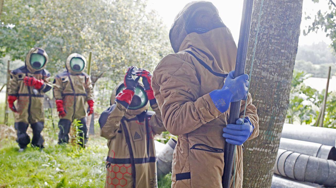 Empieza la recogida de la patata de A Limia.El técnico Miguel Rodríguez aplica el insecticida valiéndose de una pértiga para alcanzar los aproximadamente siete metros de altura a los que se encuentra el nido
