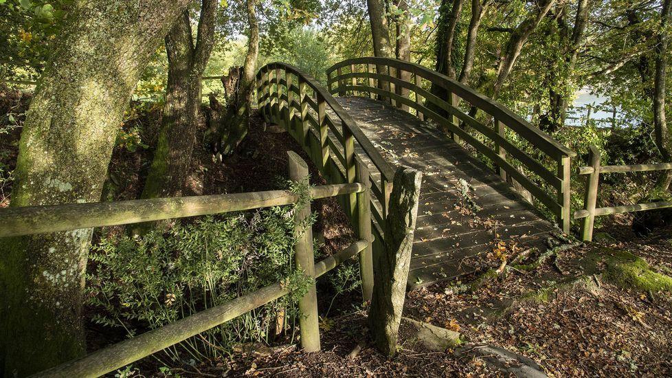 Puente de madera en el camino de los petroglifos