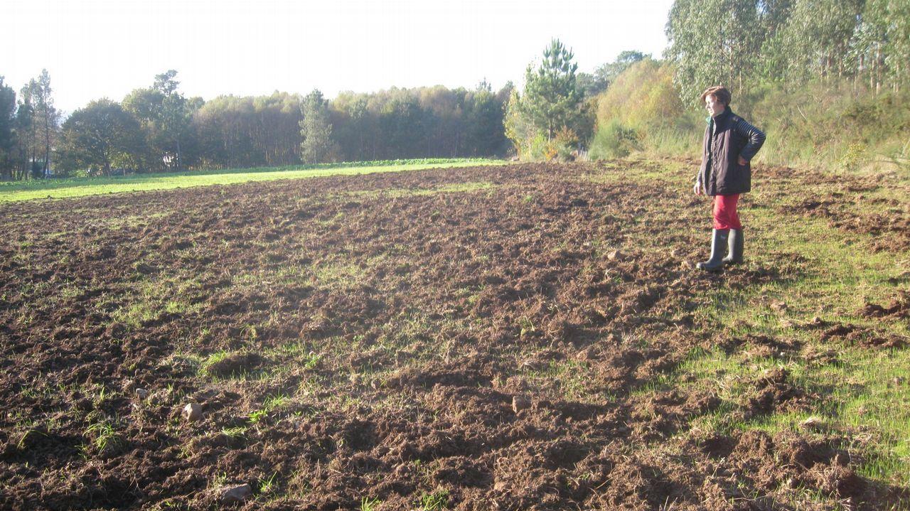 Estado no que quedou un prado de Vilalba tralo paso do xabaril