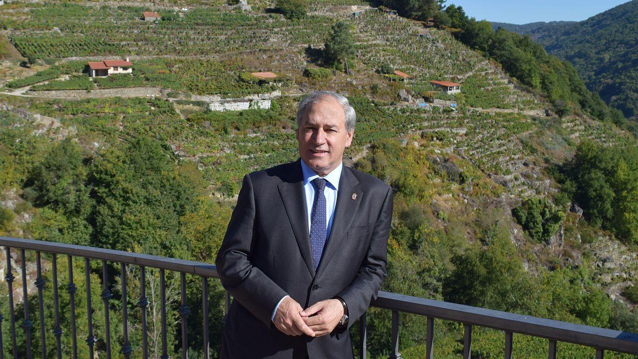 El Camiño Primitivo se zambulle en el otoño.O presidente da Deputación de Lugo, José Tomé, xunto aos bancais dos viñedos da Ribeira Sacra