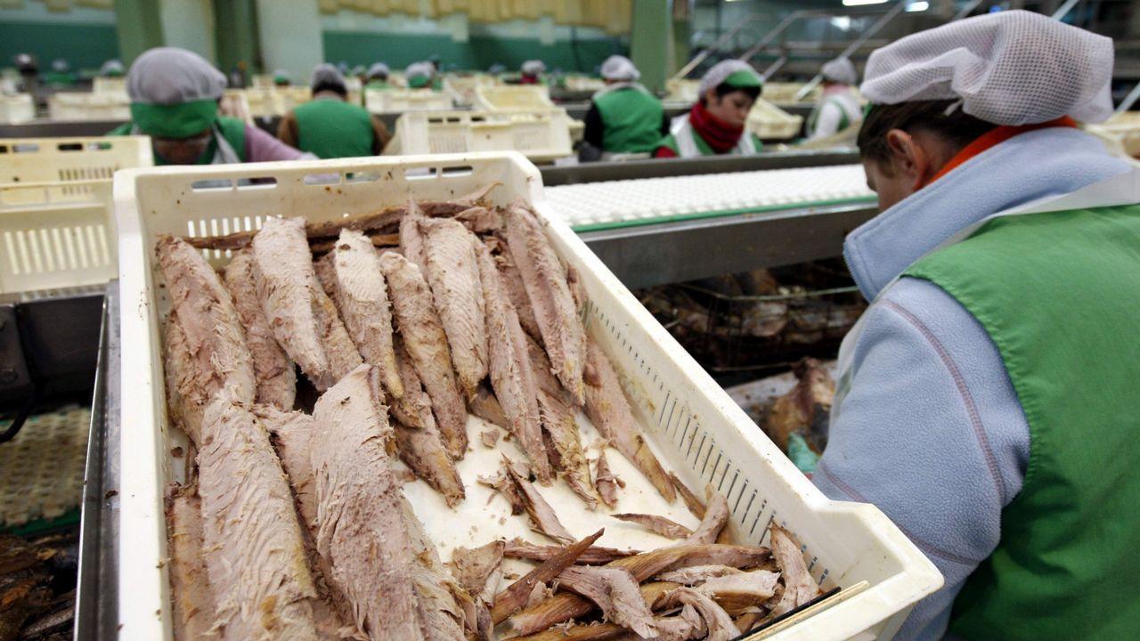 Imagen de archivo de lomos de atún en una conservera