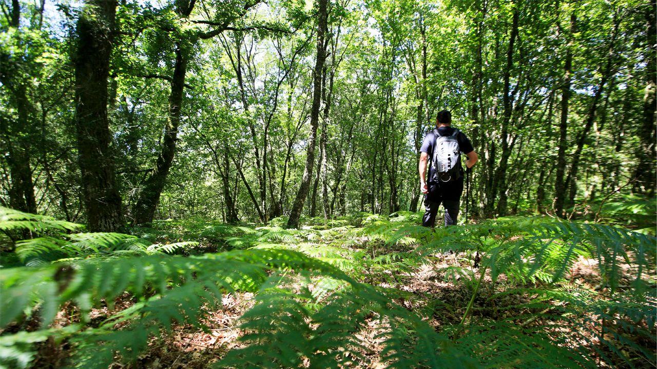 Imagen de la devesa de Nugallás, en Antas de Ulla, donde se encuentra el centro geográfico de Galicia