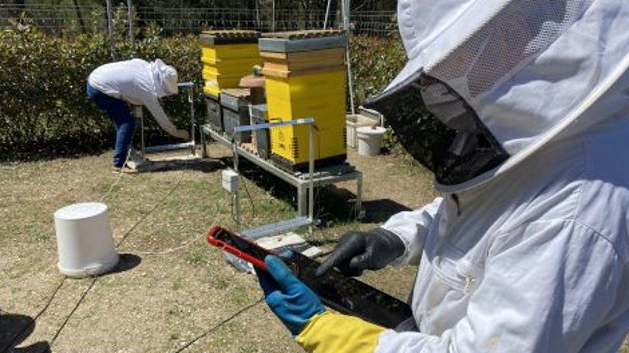 Miembros del equipo investigador recogen datos en las colmenas, protegidas con arpas eléctricas