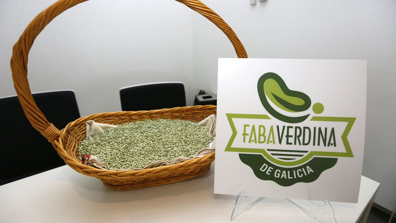 Foto de archivo de faba verdina de Galicia