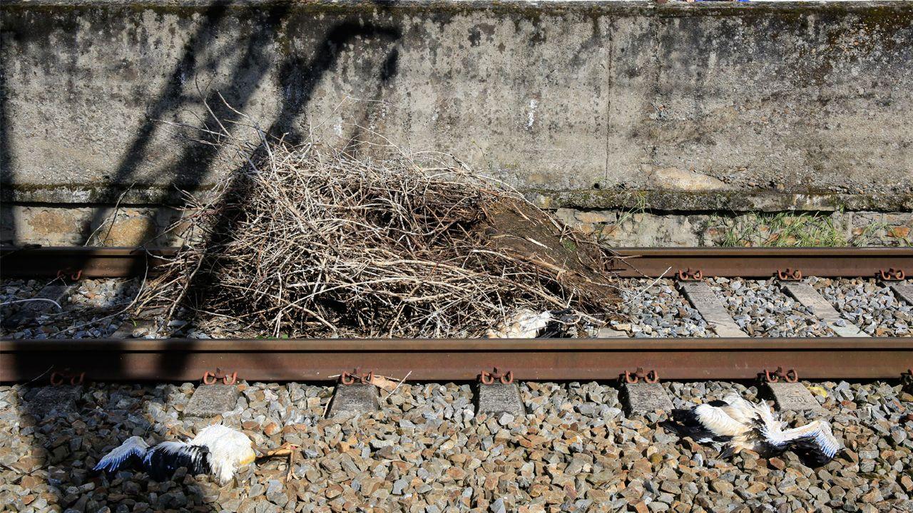 Uno de los nidos caídos, con restos de cigüeñas, sobre las vías del tren tras las fuertes rachas