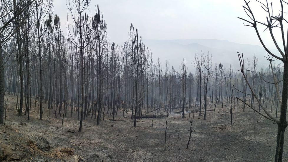 Víctor Fernández , ganadero de Chantada, acusa a un vecino de azuzar a sus perros contra sus reses.Pinos quemados en el incendio de Peites