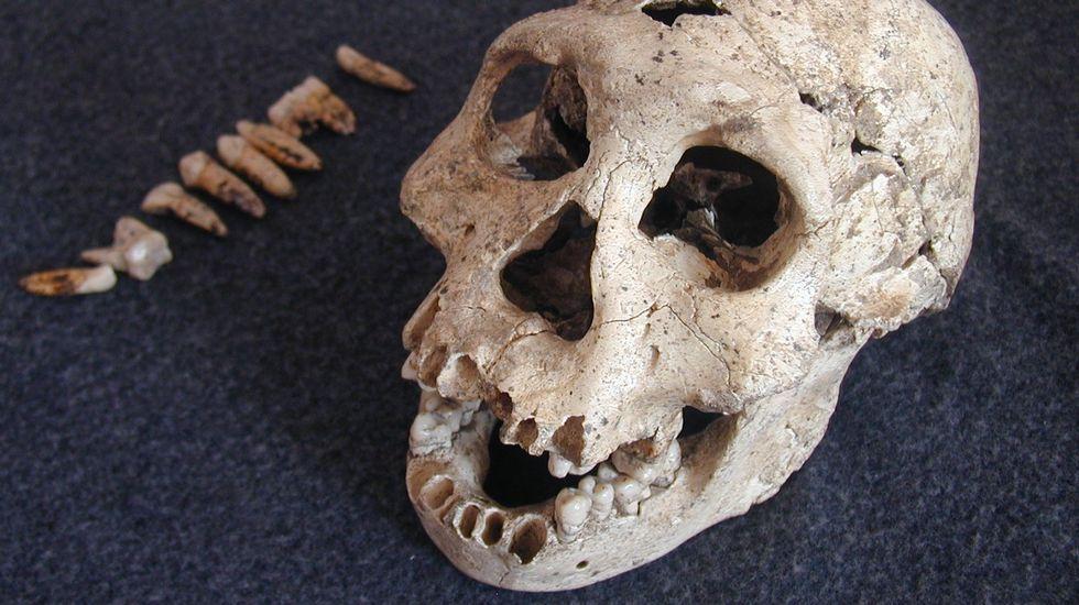 Imagen de archivo de restos fósiles de un dinosaurio encontrado en Alemania.
