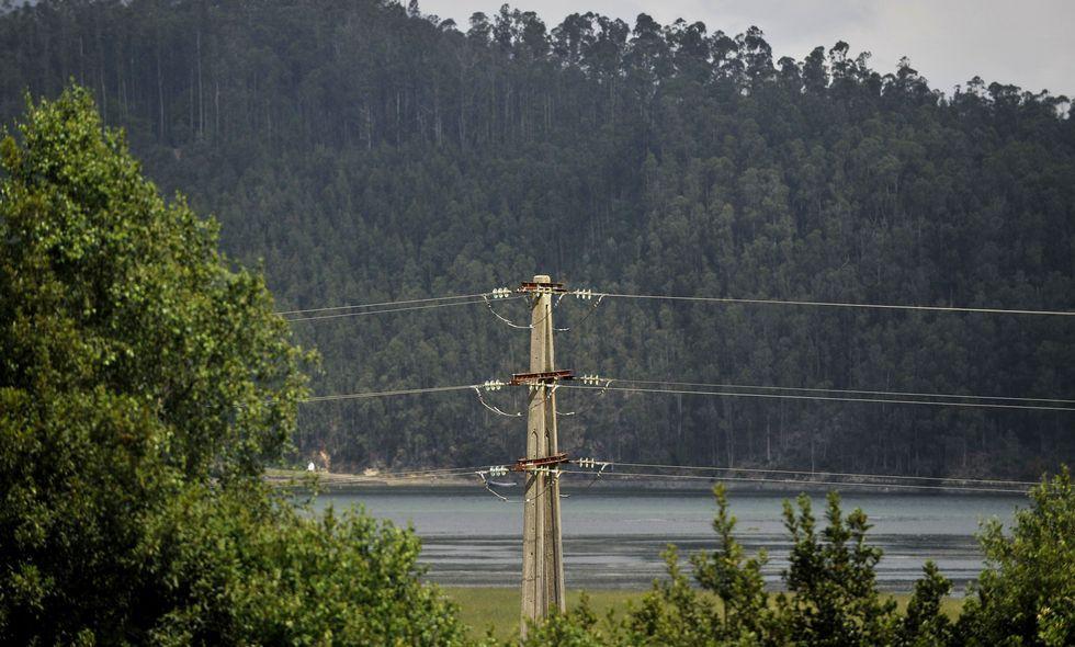 Las plantaciones de eucalipto tienen un gran peso económico en la comarca de Ortegal.