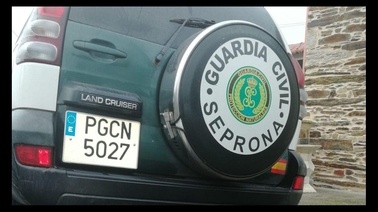 La Guardia Civil libera una partida de aves capturadas en Redondela.Estado en el que se encontraba el caballo agonizante hallado por la Guardia Civil en Pravia