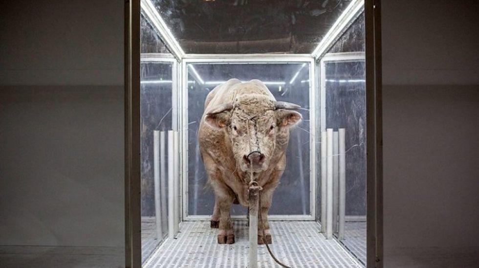 Un toro, estrella de una ópera de estreno en Madrid.Vicente Álvarez Areces