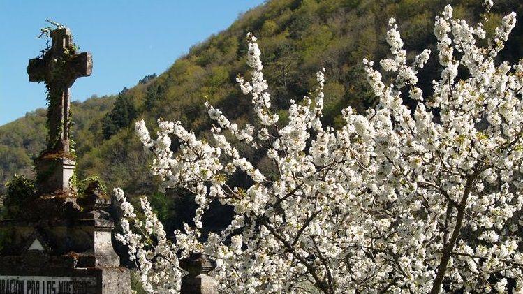 Cerezo en flor en la zona de Belesar en una foto de archivo