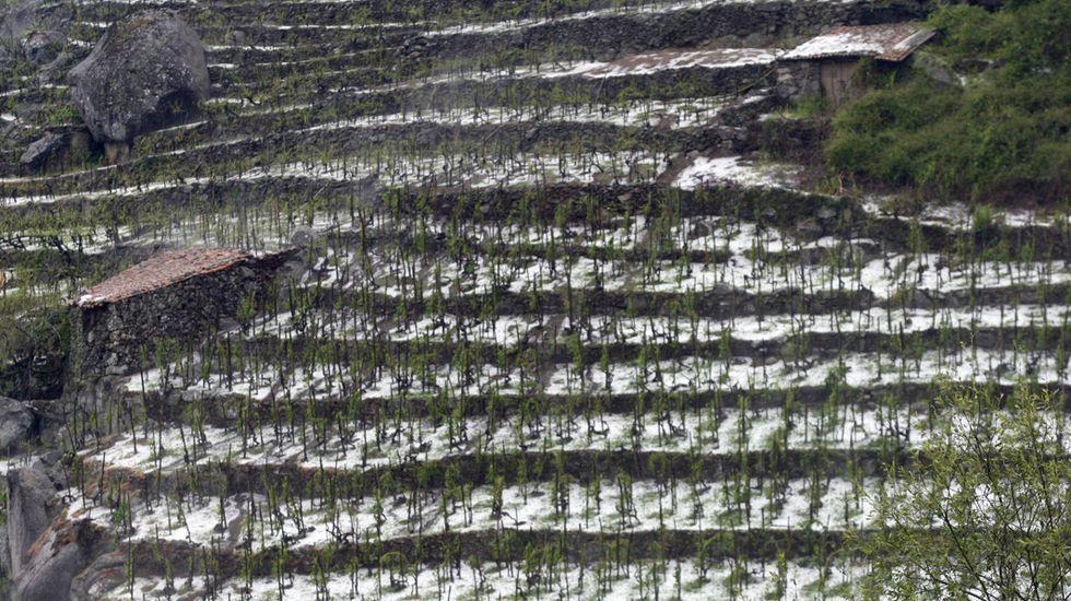 Viñas cubiertas de granizo tras la tormenta del 17 de junio en Chantada