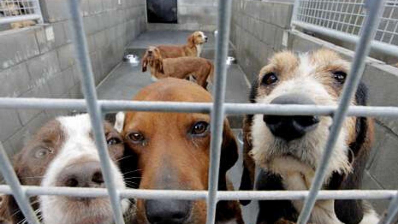 Imagen de archivo de perros en un albergue