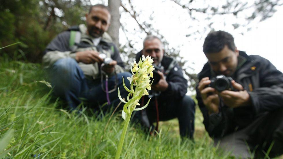 Participantes en el bioblitz celebrado en la sierra de O Courel en el 2012 fotografían un ejemplar de orquídea silvestre en el Alto do Couto