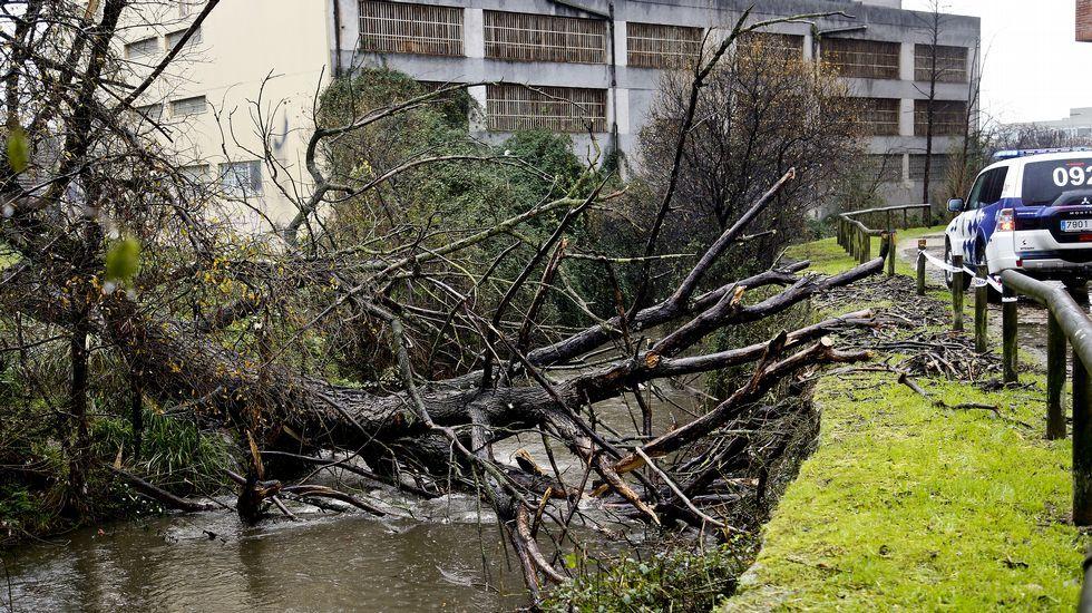 El Concello obliga a Zona Franca a retirar un árbol caído sobre el Lagares