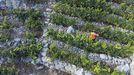 Los viticultores elegirán seis de los doce vocales en las próximas elecciones