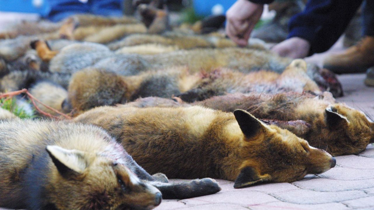 Estos siete cachorros buscan hogar