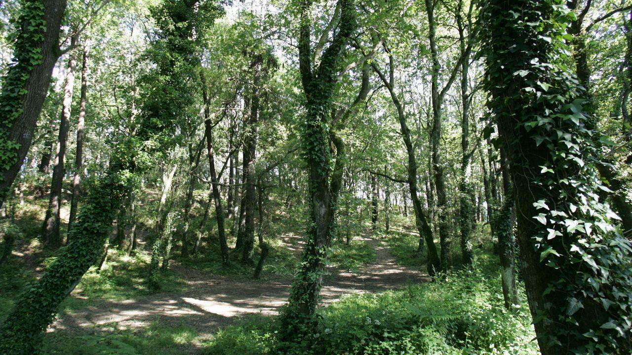 As árbores da fraga de Cecebre falaron entre elas ao coller vida na novela «O bosque animado», de Wenceslao Fernández Flórez
