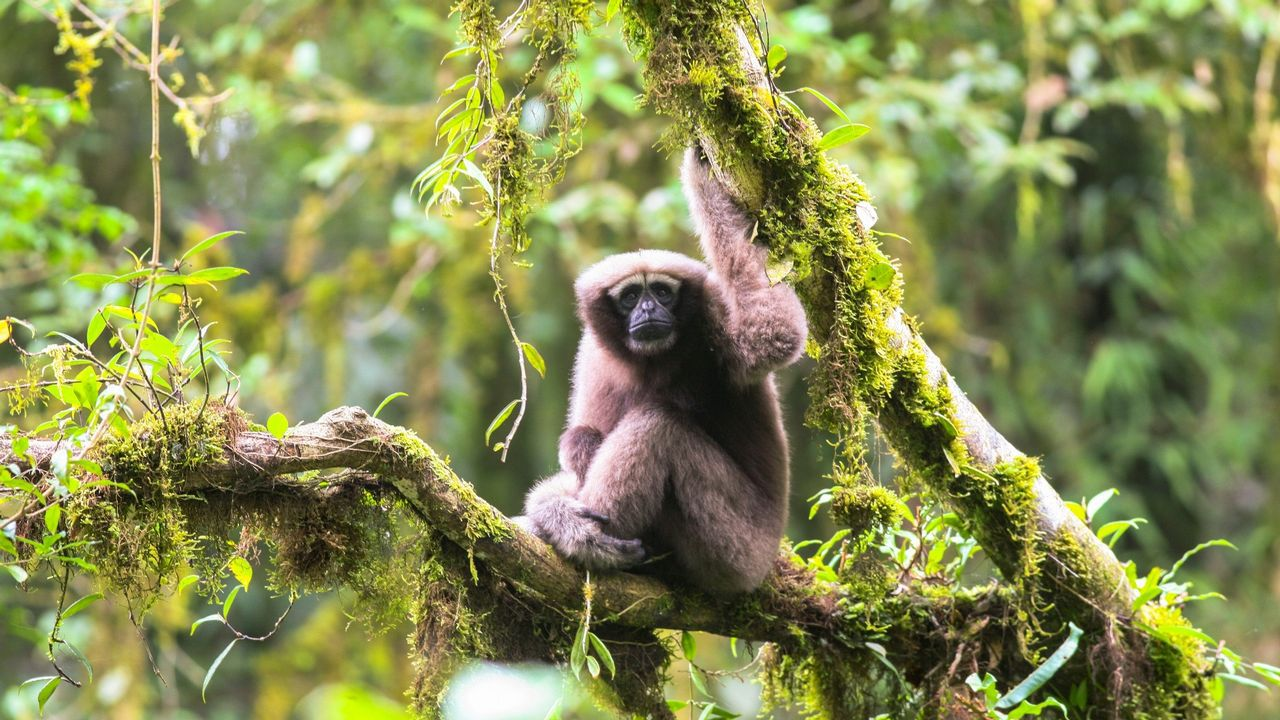 Algunas de las más sorprendentes especies descubiertas este año en el Mekong.Matt Damon con Pablo Isla