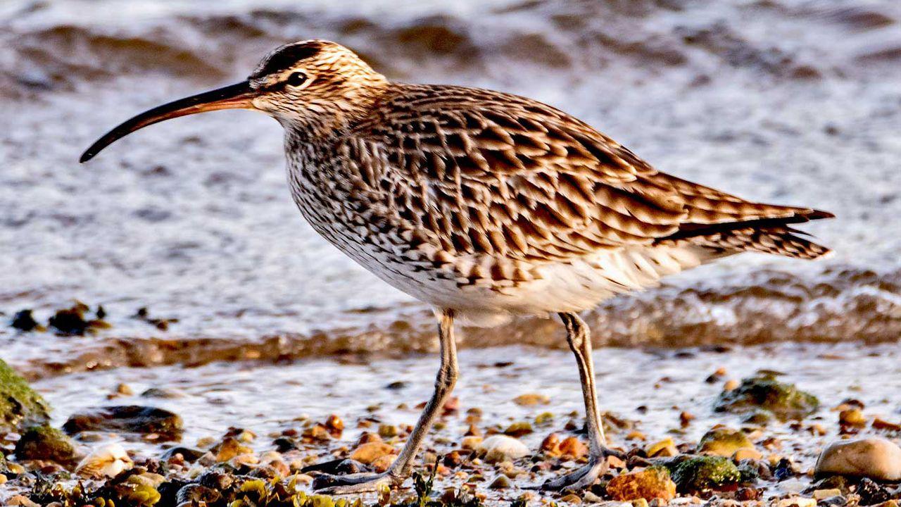 La espectacular visita de miles de aves migratorias a la ría de Avilés