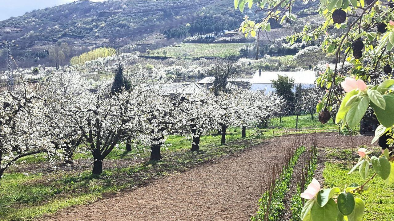 De aquí salen las cerezas que se comen los gallegos.El proyecto pretende aprovechar al máximo el trazado de la N-120 (en la imagen)
