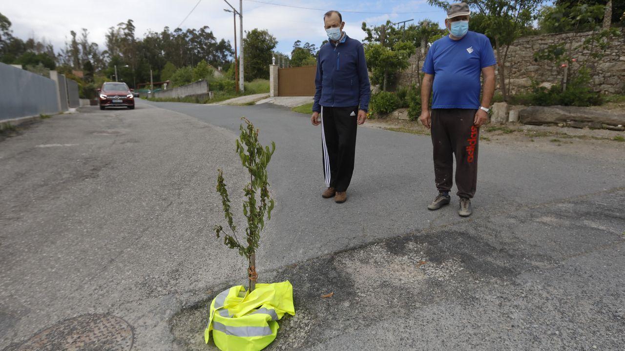 Un bache de Santiago se señaliza con un árbol