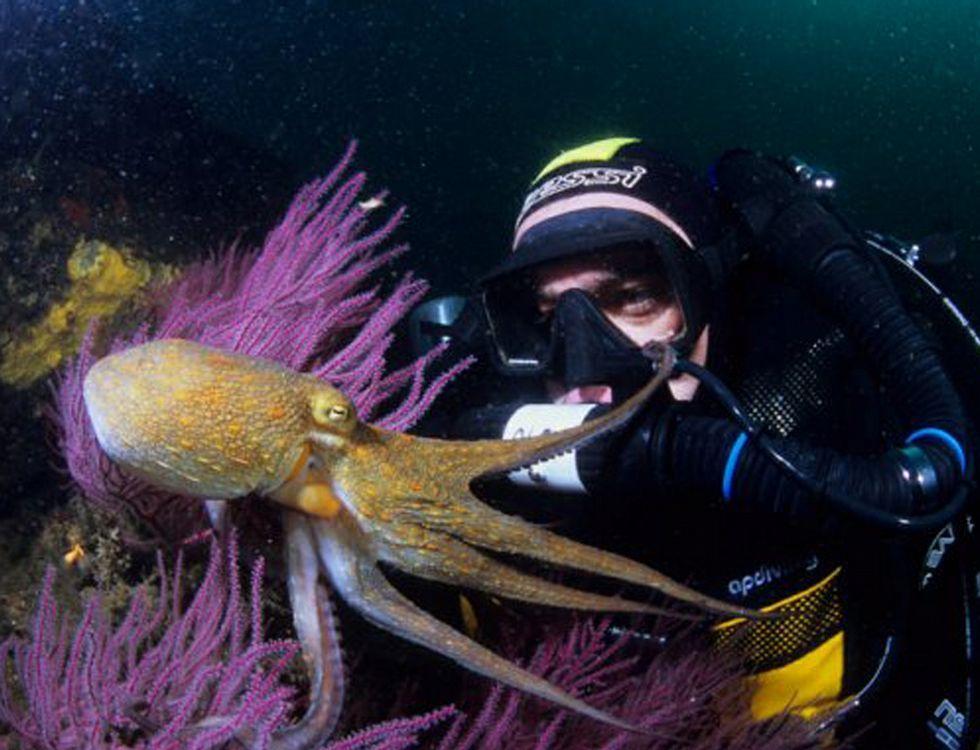 El instructor de buceo Alexis Macía, en una de sus salidas para conocer la fauna marina.