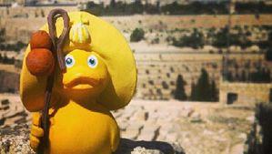 Los viajes de «Pape», el Pato Peregrino.Aganzo, en el 2006 en Riazor