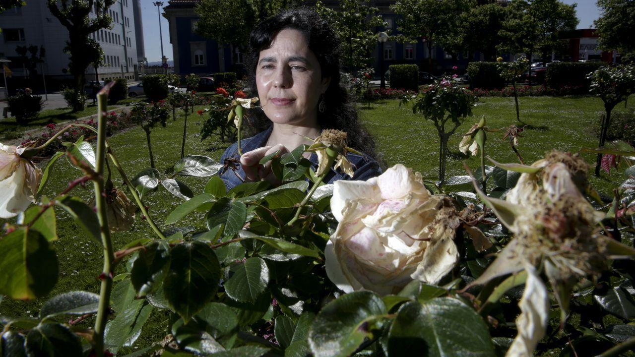 Así se vivió el escrutinio en las sedes de los partidos en A Coruña.Sonia Cajade, especialista en botánica, delante de unas rosas afectadas por la plaga del pulgón en la rosaleda de Méndez Núñez.