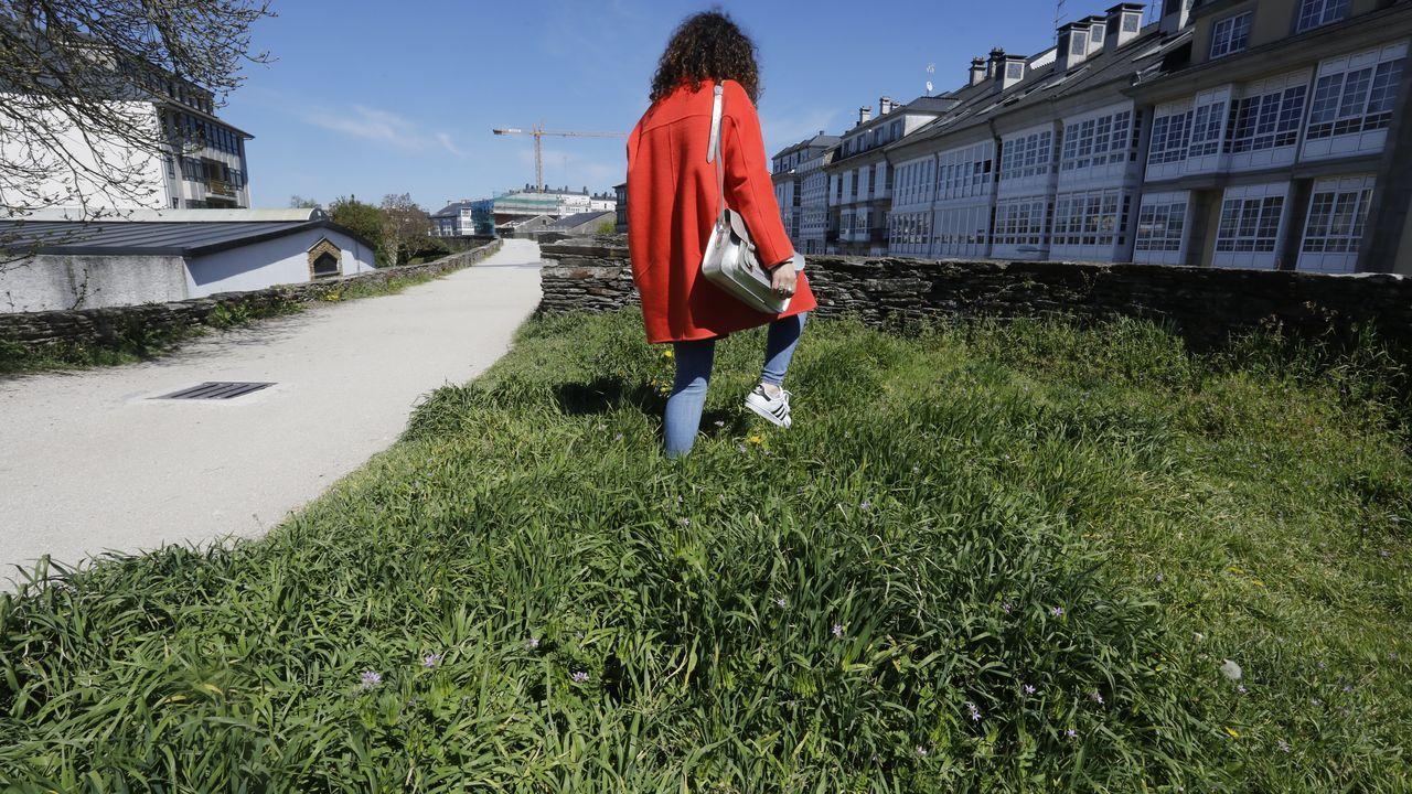 La hierba crece libre por el adarve de la Muralla.Jornada sobre nuevas vías para el rural, dos años atrás, en O Couto