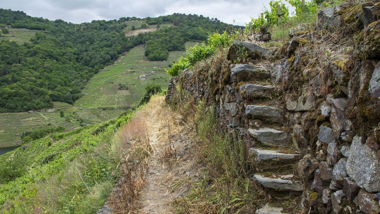 Escalones de acceso a un viñedo