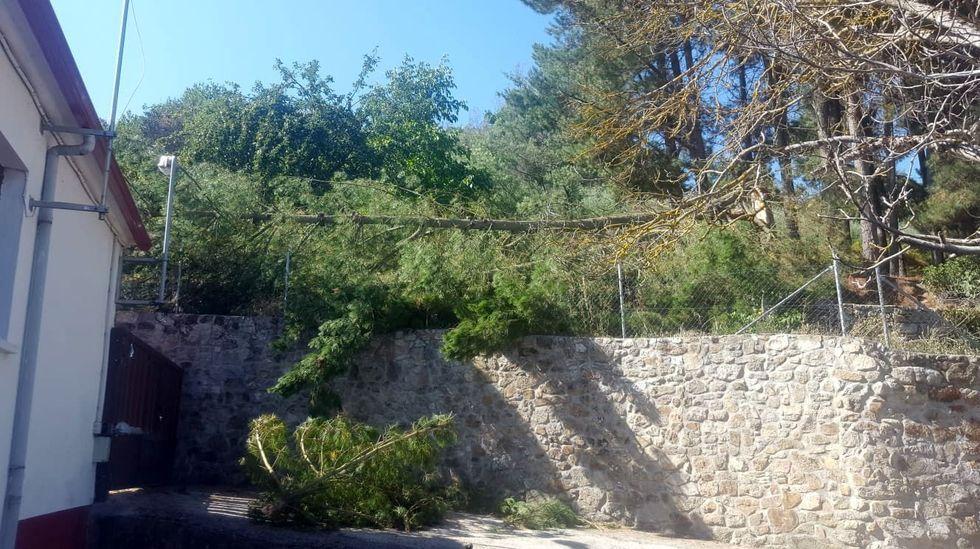 El pino, fotografiado pocos minutos después de caer sobre las casas