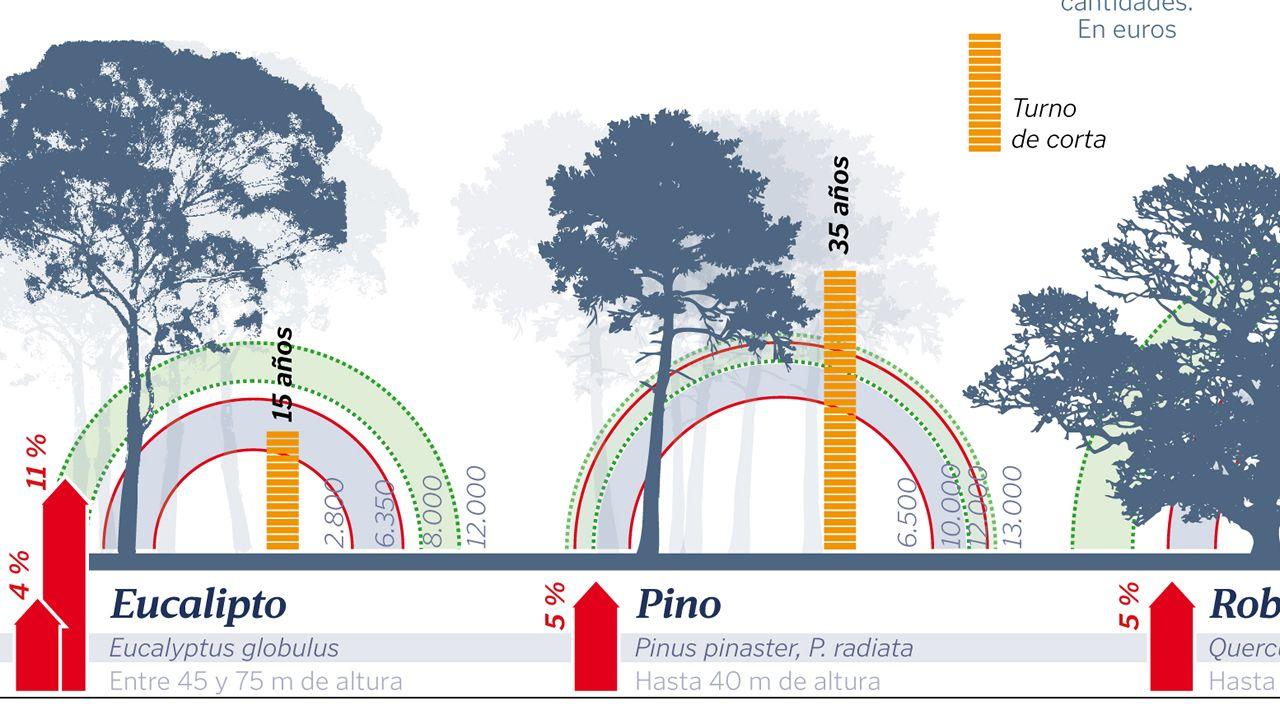 La rentabilidad del bosque gallego