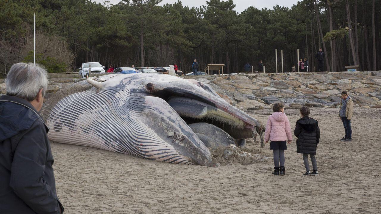 Ballenas.La ballena de 18 metros de largo y quince toneladas de peso que apareció varada a primeras horas del sábado en la playa de Balarés se convirtió en todo un atractivo turístico.