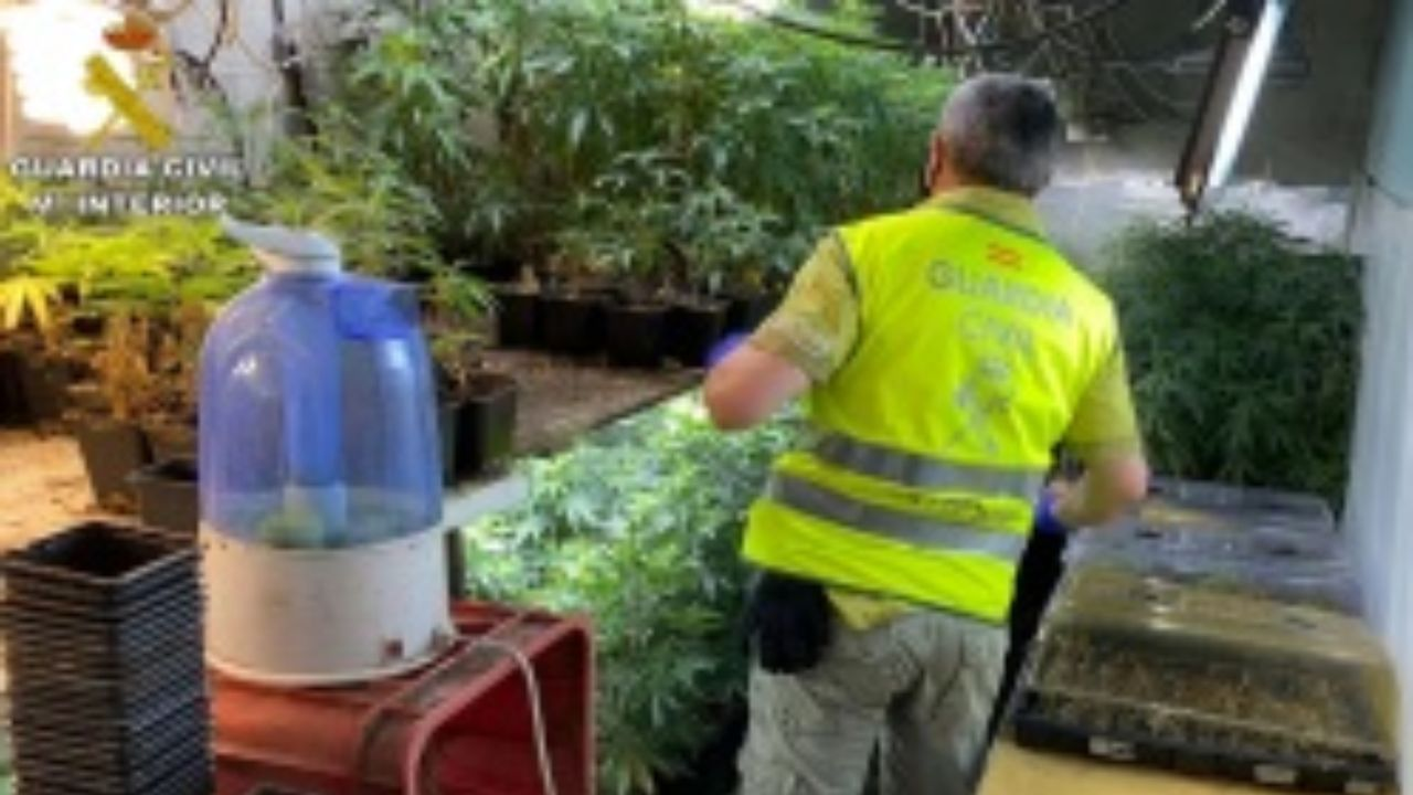 Así era la plantación de marihuana del detenido en Moraña.La plaza de las Palmeras, en Caldas de Reis, municipio donde está activo un brote de coronavirus con más de diez casos