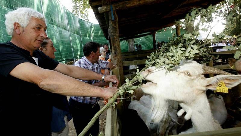 Una osa con sus oseznos en Os Ancares, en una imagen tomada en el 2010.
