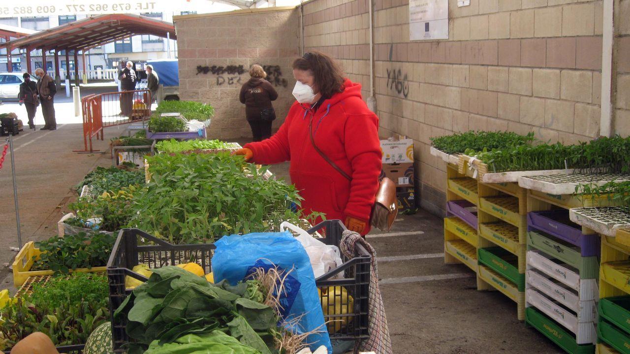 En el mercado de Vilalba abundaban este martes las plantas para cultivo