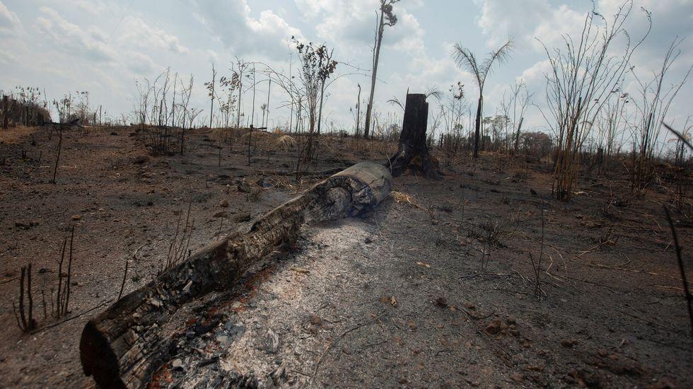 Del ágave, cultivado en México, se producen biocombustibles que general etanol