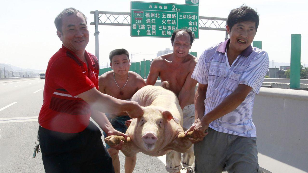 Cuatro hombres trasladan un cerdo en la provincia de Fujian
