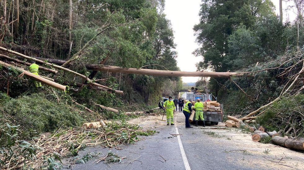 Trabajos para retirar árboles en carretera cortada en A Pobra.Prueba PCR para detectar el coronavirus