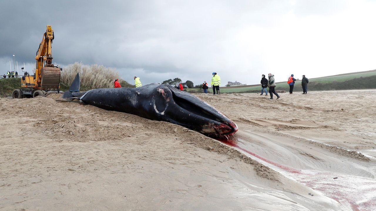 Los restos del cetáceo serán trasladados al vertedero central de Cogersa para su tratamiento