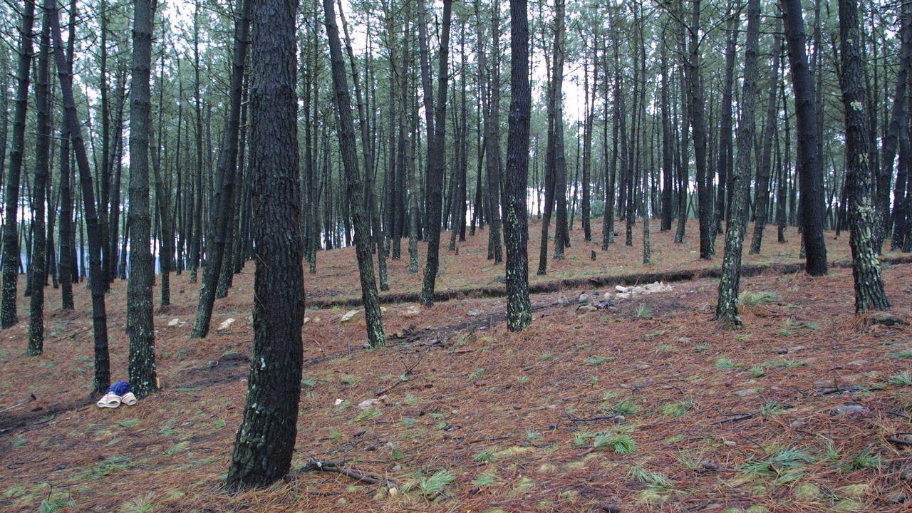 Las 10 mejores fervenzas de Pontevedra y O Salnés.El capitel, de la época tardorromana, fue recuperado en una huerta de una casa particular del municipio de Valga